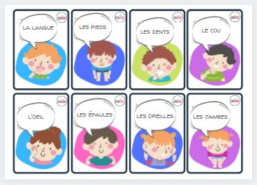 Read more about the article Flashcards – les parties du corps